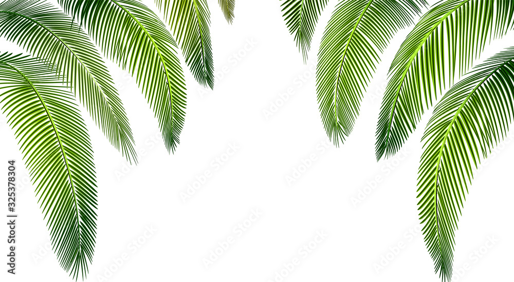 Tropical Various forms of green palm leaves. Place for advertisement, announcement. illustration <span>plik: #325378304   autor: lily_studio</span>