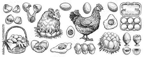 Tablou Canvas Chicken eggs and farm hen hand drawn vector