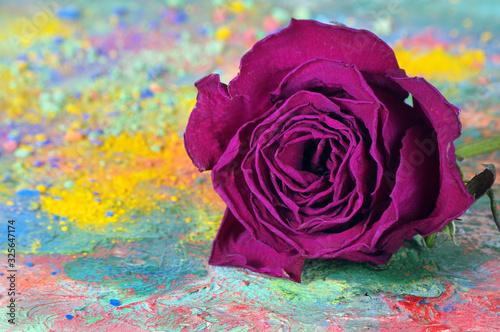 Foto dry purple rose on the artist's palette