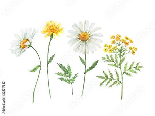 Billede på lærred Set of watercolor illustrations of daisy flowers