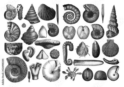 Obraz na plátně Shells fosil collection/ Antique engraved illustration from Brockhaus Konversati