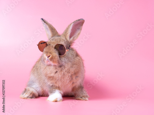 Obraz na plátně Red-brown cute baby rabbit wearing glasses sitting on pink background