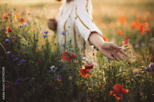 Stampa su Tela Woman in rustic dress gathering  poppy and wildflowers in sunset light, walking in summer meadow