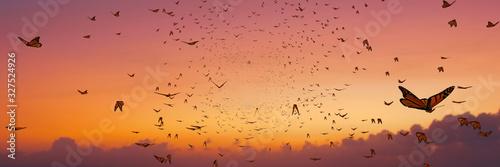 Fotografia swarm of monarch butterflies, Danaus plexippus group during sunset