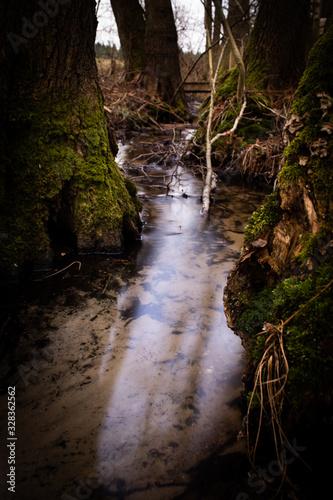 Forest brook Fototapeta