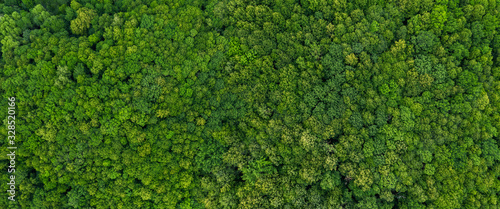top view on the forest panoramic