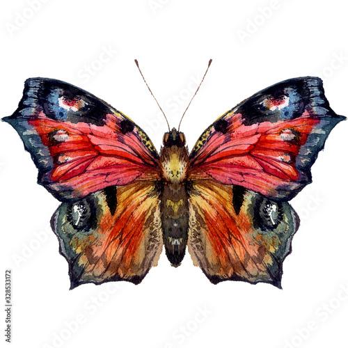 Fototapeta Watercolor Illustration of Peacock Butterfly