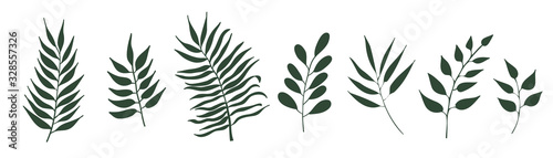 Vector set of leaves isolated on white background. Tropical palm trees branches