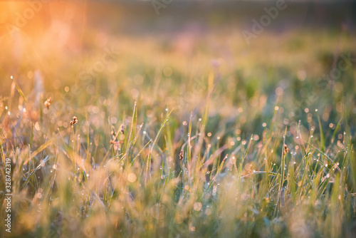 Beautiful background with morning dew on grass close Fototapet