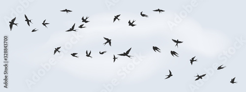Flying birds silhouette. Flock of black marine birds, doves, seagulls or swallows for decoration, isolated black on white background. Vector freedom concept