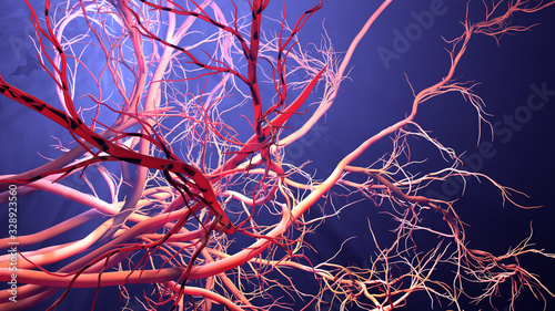 Canvas Print New blood vessel formation