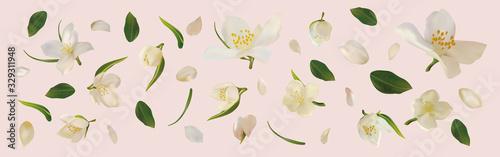 Obraz na płótnie 3D realistic jasmine with green leaf