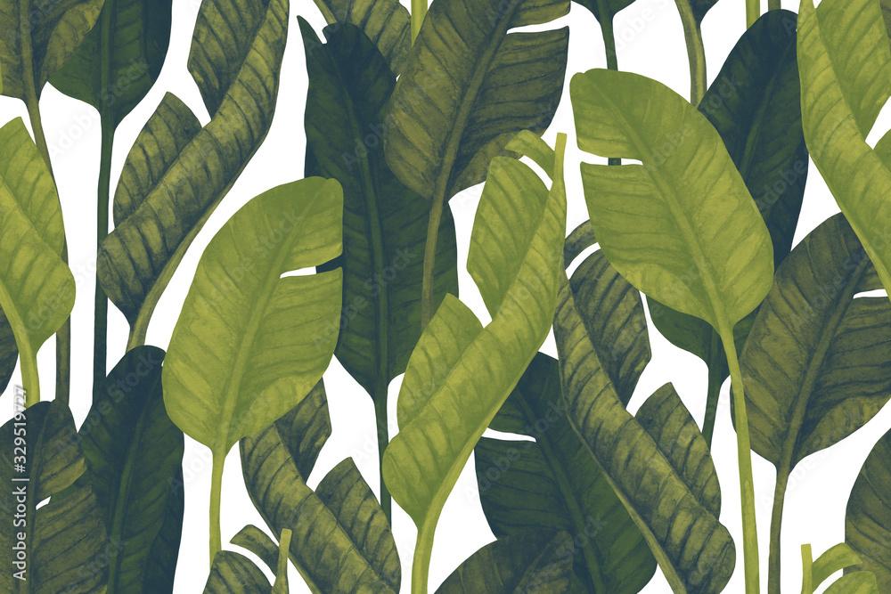 Fototapeta Fresh green banana leaves on white background.