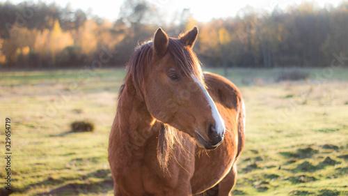 Konie na farmie, koń, osioł, naura, farma, zwierzęta