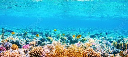 Cuadros en Lienzo Beautifiul underwater panoramic view with tropical fish and coral reefs