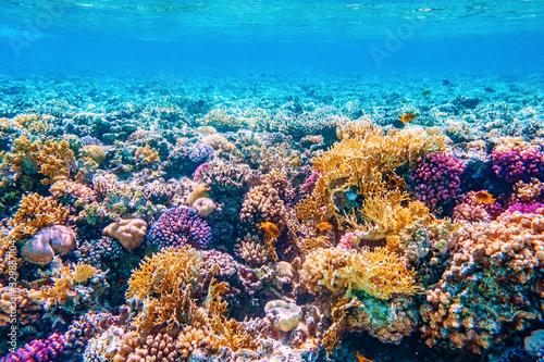 Carta da parati Beautifiul underwater world with tropical fish and coral reefs