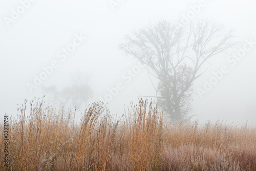 Fotografia Frosted autumn tall grass prairie in fog, Fort Custer State Park, Michigan, USA