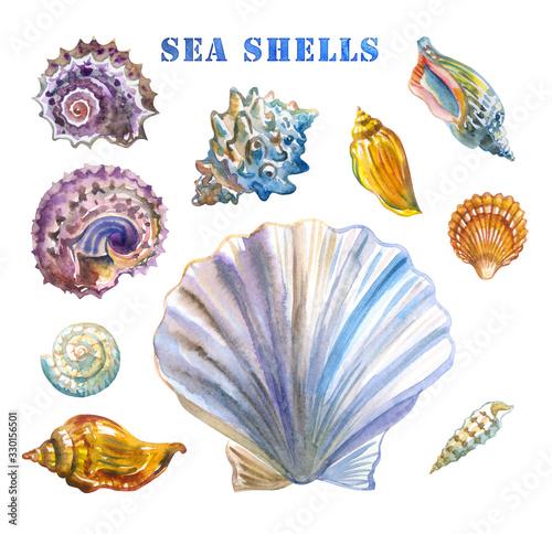Obraz na płótnie Set of sea shells, watercolor illustration on a white background.