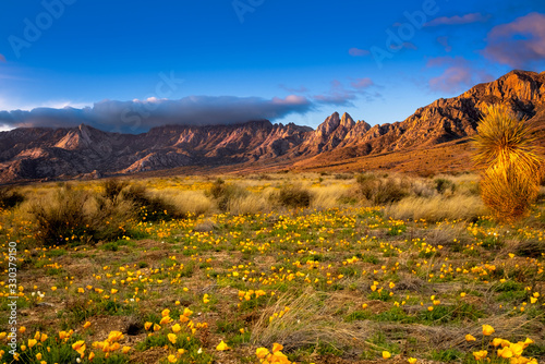 Fotografie, Obraz Poppies Blooming
