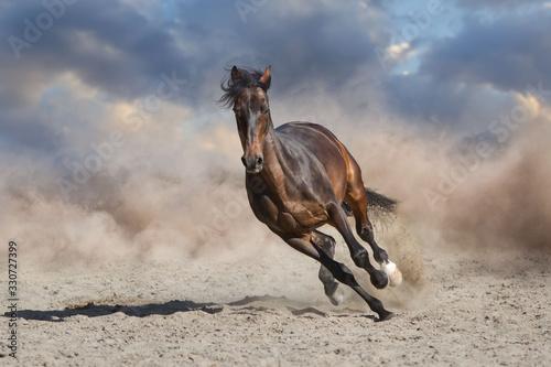 horse in desert Fototapeta