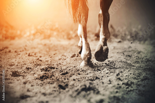 Photo The graceful legs of a galloping horse, its hooves clattering on the sand, raising dust in the sunlight