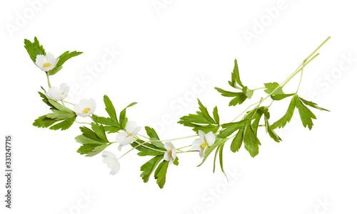 Tableau sur Toile Bouquet of white anemone flowers