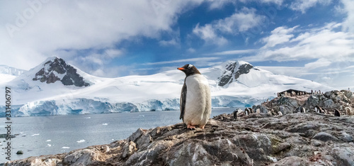 Photo Penguins in Antarctica. Port Lockroy.