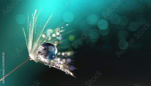 Piękna błyszcząca kropla rosy na nasionach mniszka lekarskiego w przyrodzie. Makro z bliska. Lśniący efekt bokeh. Ciemnoniebieski zielony