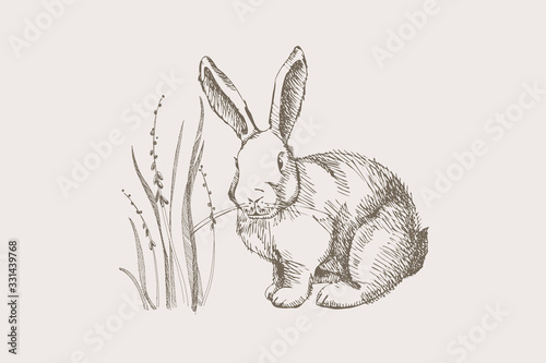 Fotografiet Cute hand-drawn white rabbit with first spring flowers on a light isolated background