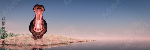 Fotografia hippopotamus in the wild