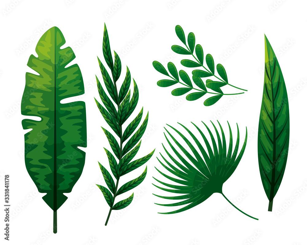 set of tropical leafs naturals vector illustration design <span>plik: #331841178 | autor: Gstudio</span>