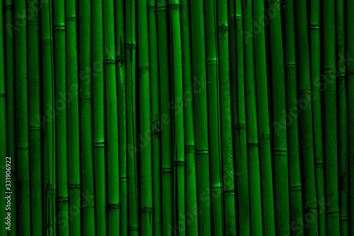 Fotografija Bamboo wall background. Dark green bamboo fence texture