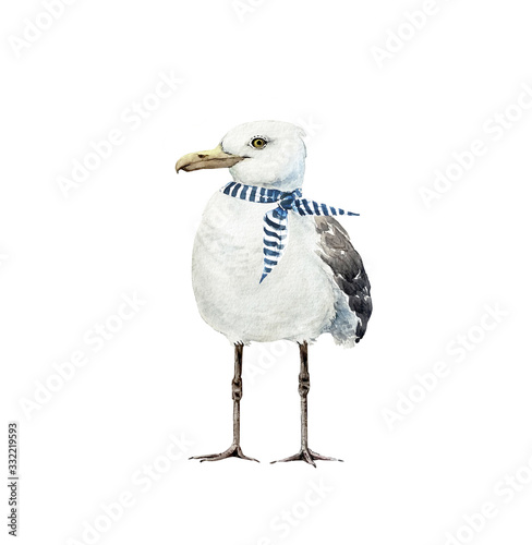 Canvas Print white bird seagull with a scarf in a marine style, watercolor illustration