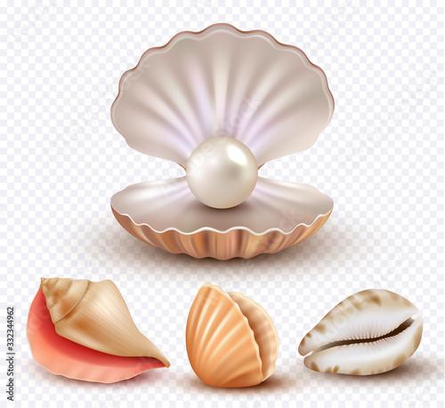 Carta da parati Realistic seashells