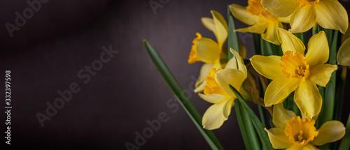Fotografia Bouquet of yellow daffodils on black background