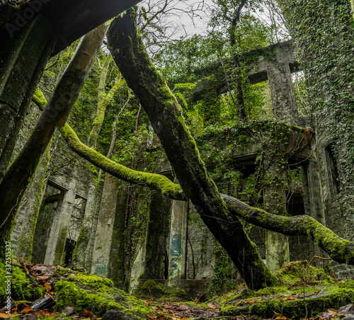 Stampa su Tela Old ruins with rotten timbers and moss