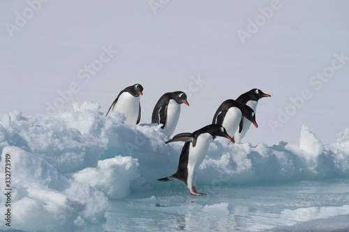 Wallpaper Mural Gentoo Penguins on the ice