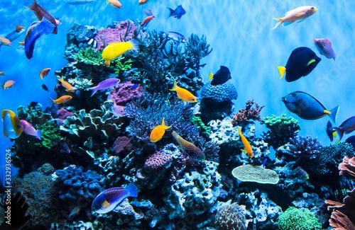 Aquarium in the Monterey Aquarium Fototapeta