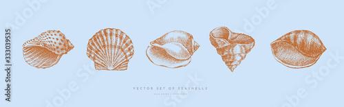 Fotografía Collection of hand-drawn realistic seashells