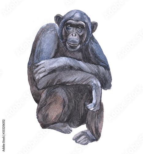 Fotografía Watercolor chimpanzees  animal on a white background illustration