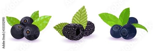 Photo Set with forest wild black and dark blue berries blueberries, palm tree or acai, dewberries or blackberries