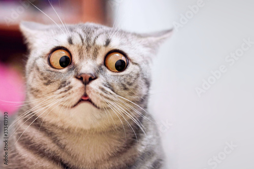 Wallpaper Mural Skeptic surprised cat thinking & dont know what to do, big eyes closeup