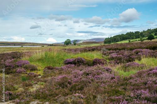 Obraz na plátně Countryside at Lochindorb