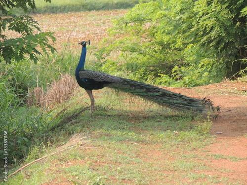 Fotografija bird, ostrich, animal, wildlife, nature, wild, emu, beak, neck, rhea, flightless