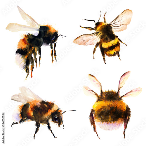 Fotomural Bumblebee/bee watercolor drawing. Isolated objects. Insects