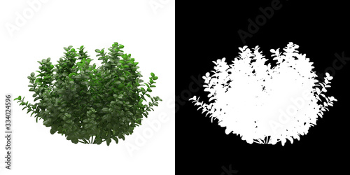 Stampa su Tela Left view of tree (Ficus Microcarpa) png with alpha channel to cutout made with