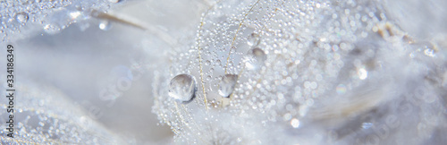 Wallpaper Mural Beautiful dew drops on a dandelion seed macro.