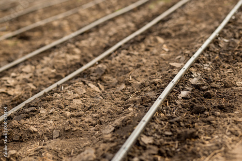 Photographie Use of drip irrigation in arid southern regions