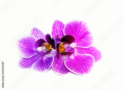 Photo Purple orchid flowers on a white background.