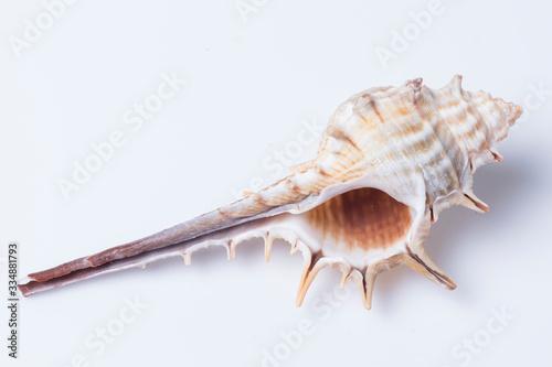 Bodegón de conchas de mar. Naturaleza muerta. Fototapete